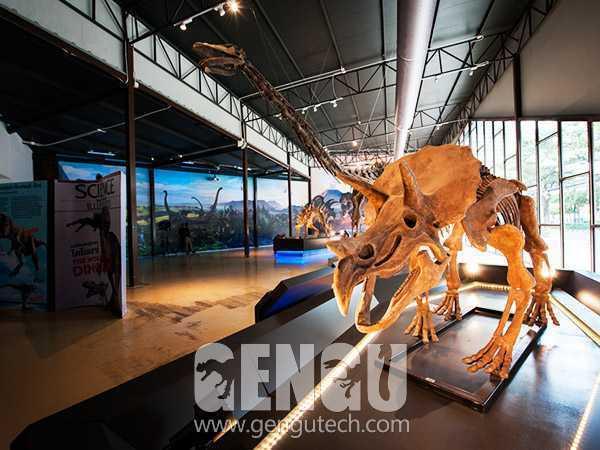 Evolution of Dinosaur Fossils