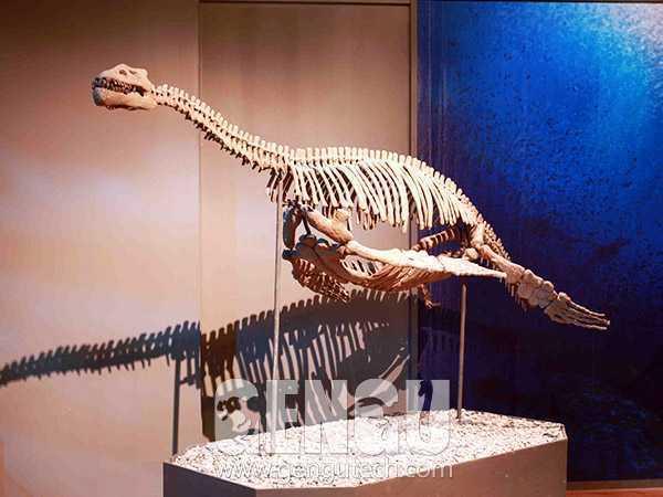 Simulation Dinosaur Production Steps
