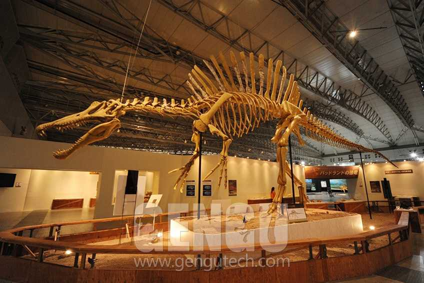 Why Are There Dinosaur Fossil Replicas?