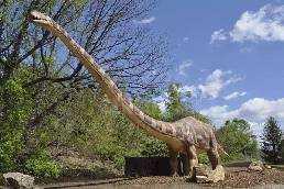 Jurassic Diplodocus