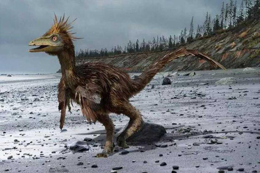 The Smartest Dinosaur-Troodon