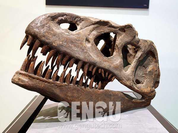 T-rex Skull(FP-193)