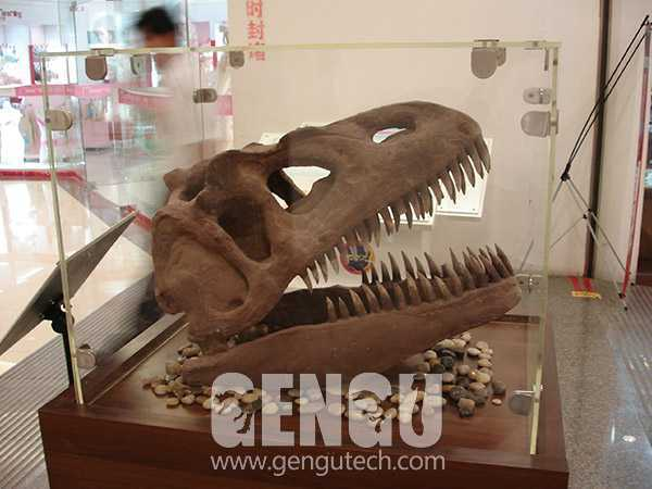 T-rex Skull(FP-194)