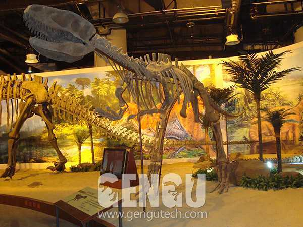 Yangchuanosaurus Fossil(FP-220)