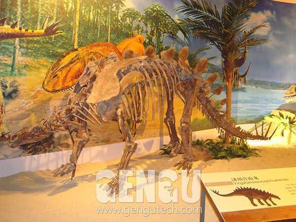 Yingshanosaurus Fossil(FP-221)