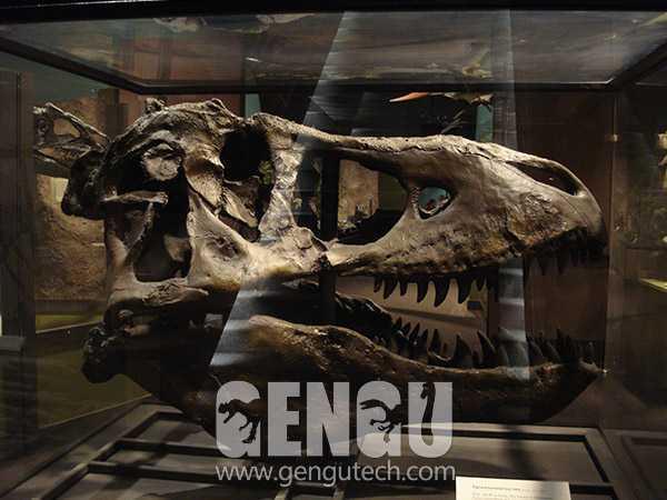 T-Rex Skull(FP-227)