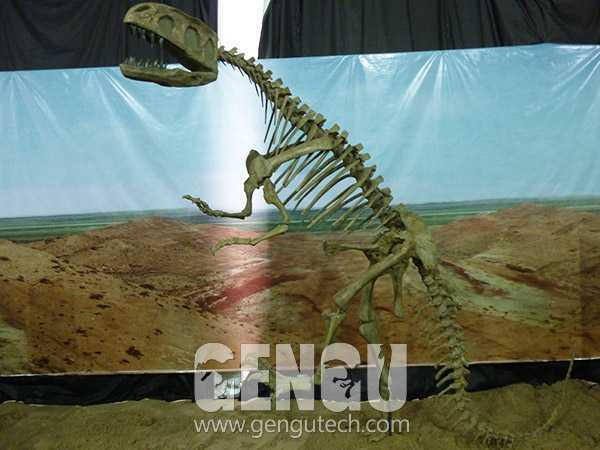 Yangchuanosaurus Fossil(FP-229)
