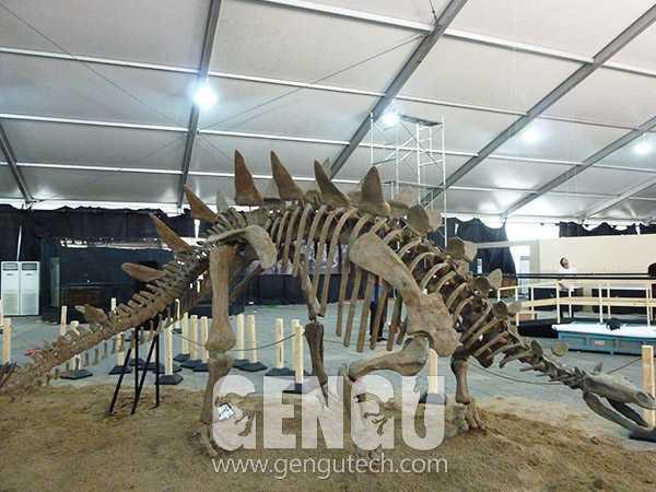 Stegosaurus Fossil(FP-235)