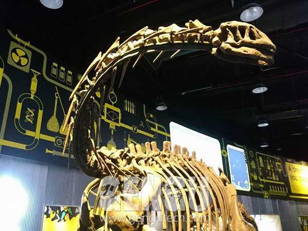 Apatosaurus Skeleton(FP-237)