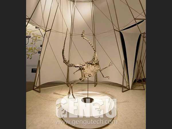 Ornitholestes Skeleton(FP-238)
