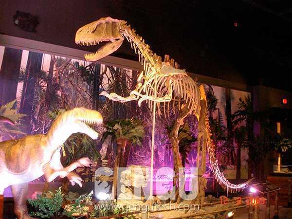 Yangchuanosaurus Fossil(FP-240)