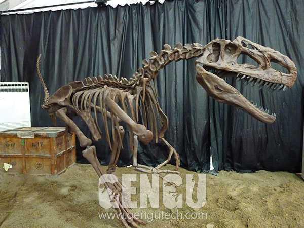 Monolophosaurus Fossil(FP-245)