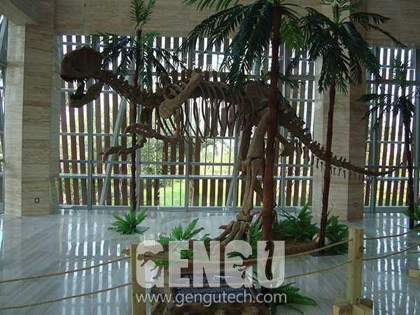Yangchuanosaurus Fossil(FP-246)