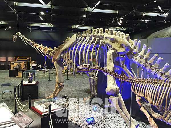 Mamenchisaurus Fossil(FP-248)
