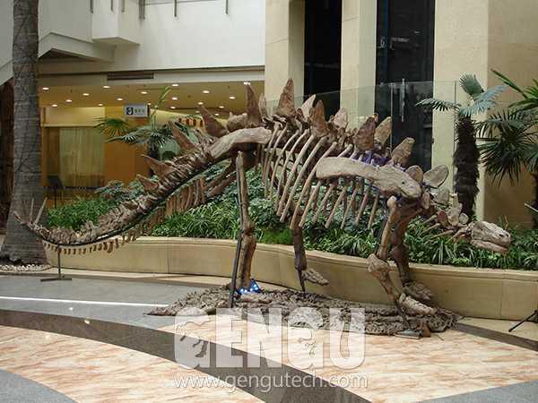 Tuojiangosaurus Fossil(FP-250)