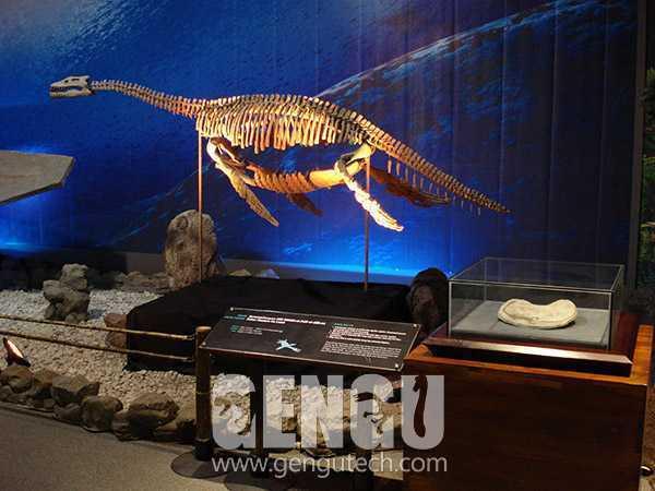 Pliosaurus Fossil(FP-264)