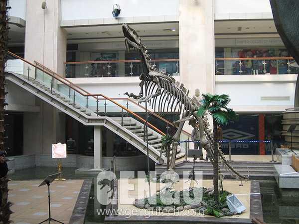 Yangchuanosaurus Fossil(FP-268)