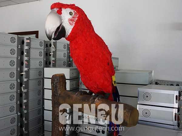 Parrot(AA-604)