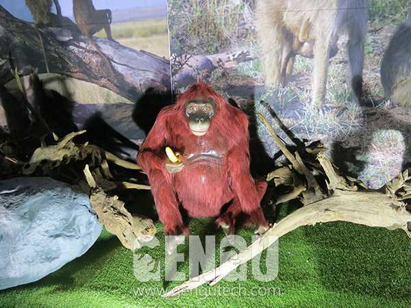 Orangutan(AA-617)
