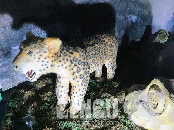 Leopard(AA-620)
