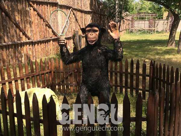 Chimpanzee(AA-623)