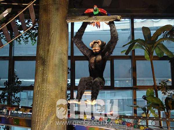 Chimpanzee(AA-625)