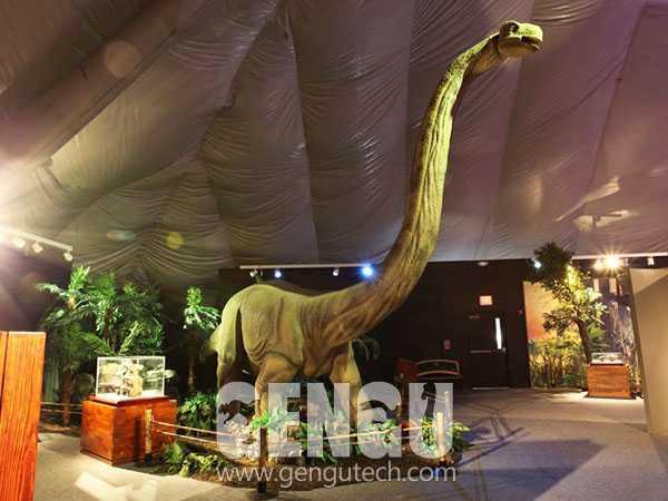 Omeisaurus(AD-636)