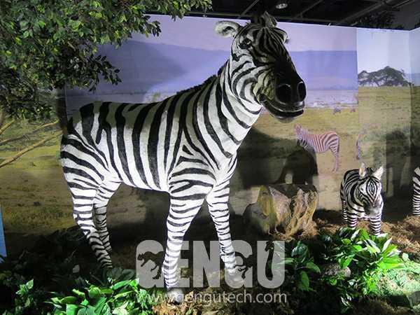 Zebra(AA-696)