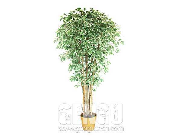Banyan tree(AP-885)
