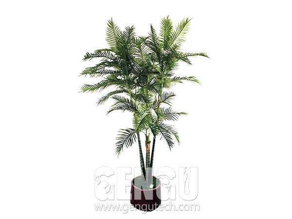 Chrysalidocarpus lutescens(AP-910)