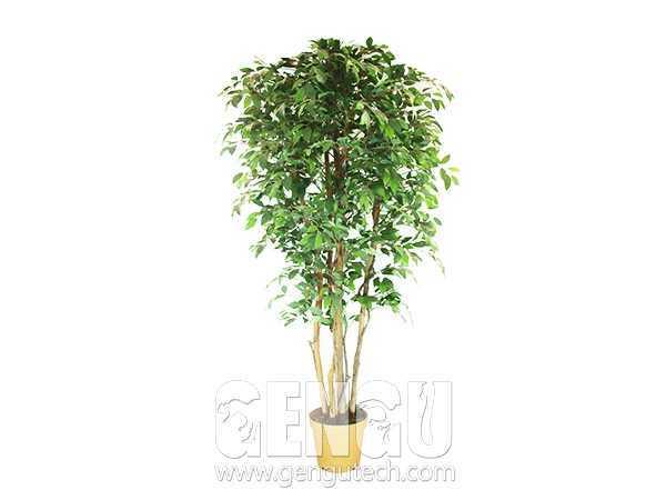 Banyan tree(AP-918)