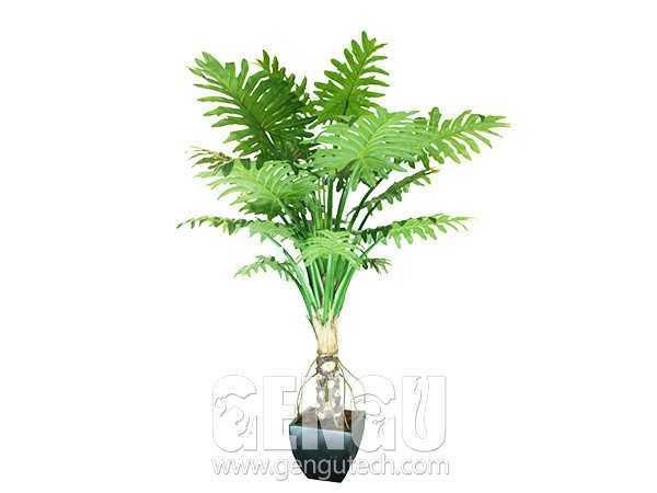 喜林芋Philodendron