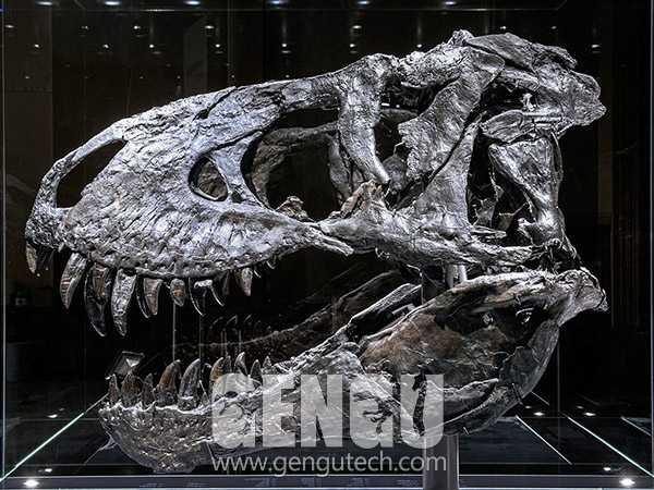 T-Rex Skull(FP-1014)