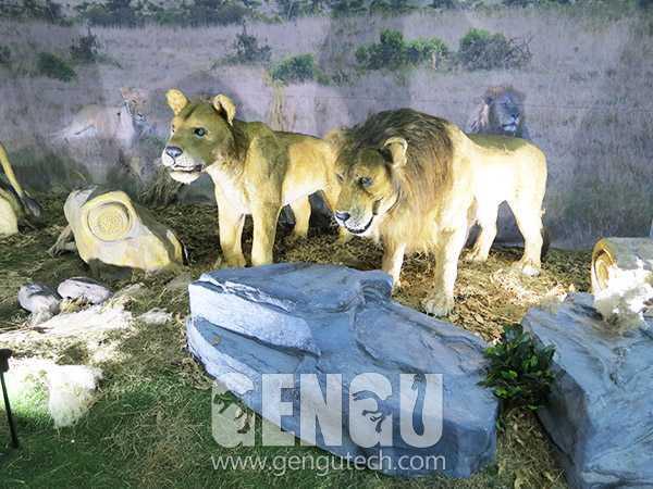 Lion(AA-1251)