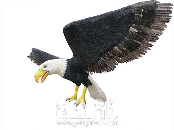 Eagle(AA-1262)
