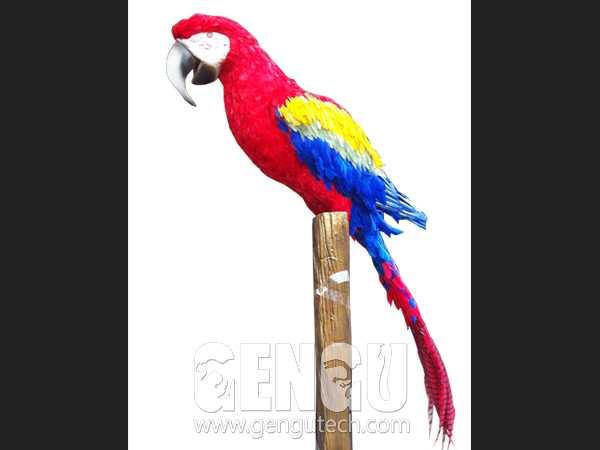 Parrot(AA-1242)