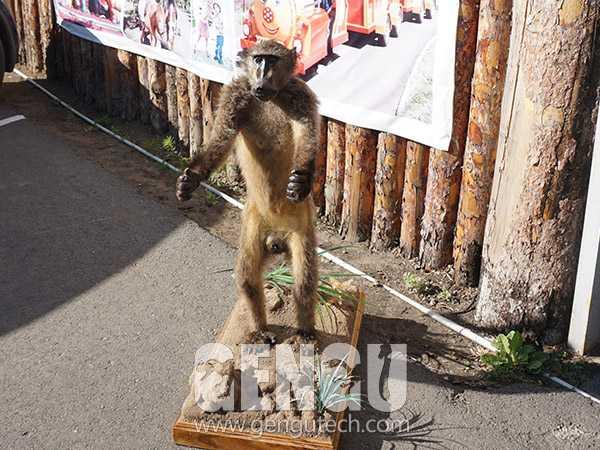 Monkey(AA-1263)