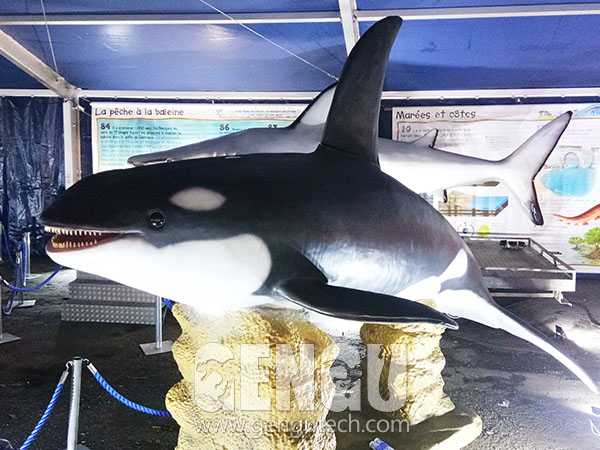 Killer Whale(AA-1318)