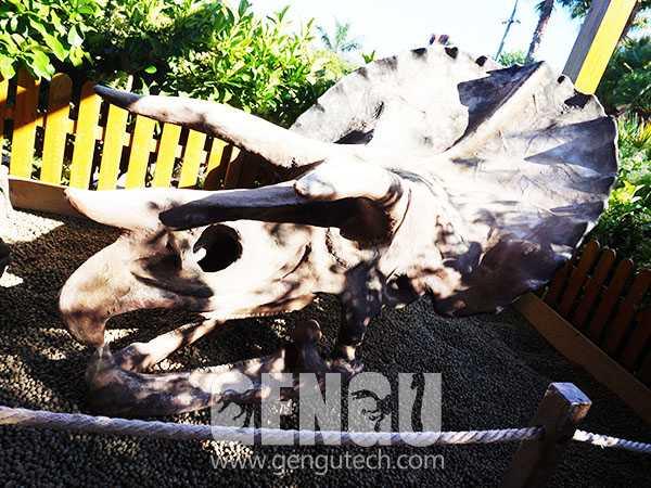 Triceratops Skull(FP-1378)
